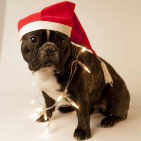 Valter Wistbacka önskar alla en riktig god jul