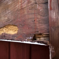 Fönsterfoder med insektsangrepp orsakade av fukt.
