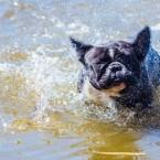 Att skaka sig torr när man står i vatten är svårt.
