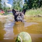 Valter på väg ut i vattnet för att hämta bollen.