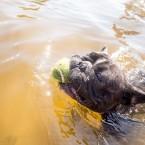 Valter har precis lärt sig ta bollen från vattnet