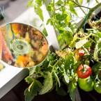 Fåglarna har ätit av mina tomater. För att skrämma dem använde jag det värsta jag vet: Windows XP med Explorer 6 förinstallerat.