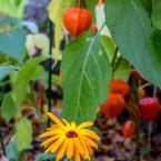 Vackra färger lyser upp trädgården