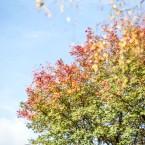 Trädtopparna börjar få färg
