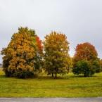 Träd i höstskrud.