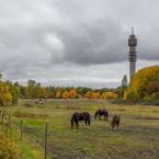 Hästar vid Kaknäs.