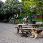 Mellanschnauser, Fransk Bulldogg och Schäfer