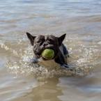 Badar med bollen