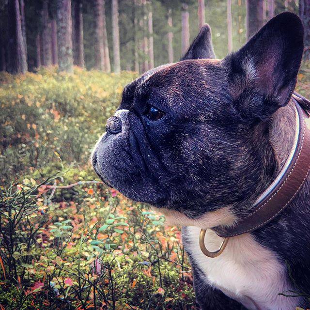 #valpr i skogen.