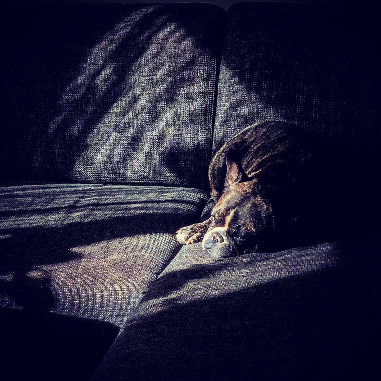 Födelsedagsvila i soffan. #valpr